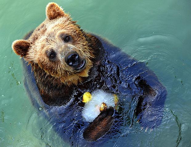 rome-biopark-bear