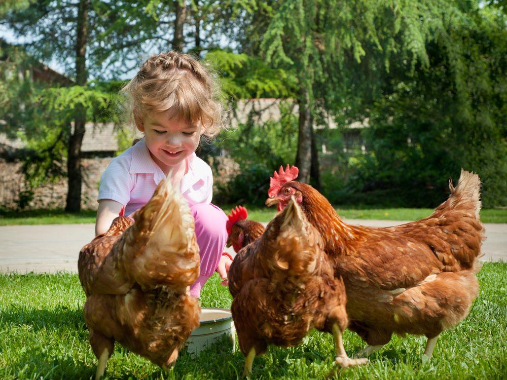 fattoria-didattica-tivoli-galline